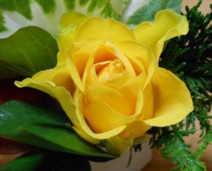 花の写真黄色い薔薇