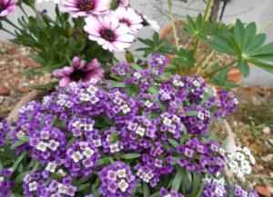 寄せ植えの花の写真