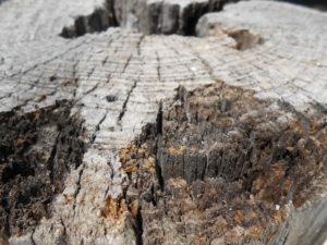 木株の写真