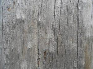 木目の写真